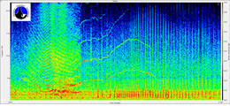 SpectaPLUS spectrogram of juvenile orca vocalizations